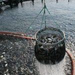 Produce y Banco Mundial invierten en Perú S/ 113 millones en Pesca y Acuicultura